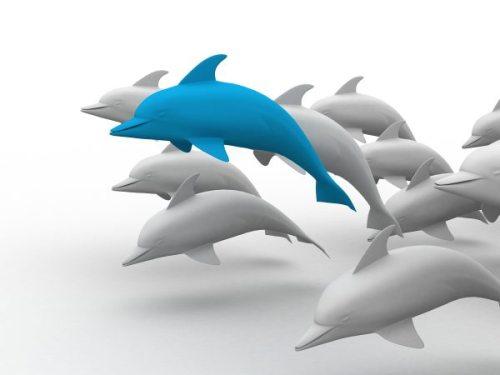 3d-dolphins_Myr-4U_u