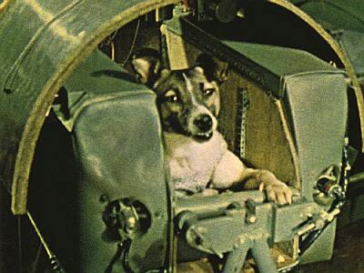 sputnik-2-laika