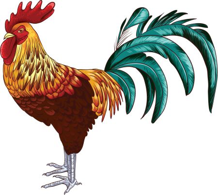 vector-rooster_gyvpwkiu_l