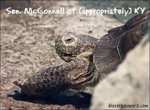senator-mcconnell-of-ky-mitch