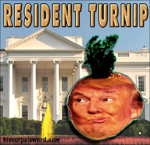 trump-turnipp
